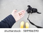 treats for the dog training.... | Shutterstock . vector #589986590