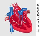 the human heart  the study of... | Shutterstock .eps vector #590002238