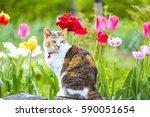 Tulip And Cat