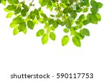 Green Leaves Isolated On White...