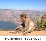 monkey   Shutterstock . vector #590170814