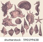 seashells. design set. hand... | Shutterstock .eps vector #590199638