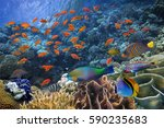 Photo of a tropical Fish on a coral reef. Red Sea - stock photo