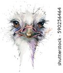 Ostrich Watercolor Illustration