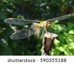 Dragonfly On A Twig On A Sunny...
