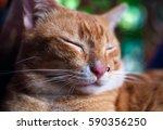 Red Zen Cat Sleeping With...