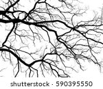 Silhouette Dry Branch Tree