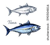 tuna fish isolated sketch.... | Shutterstock .eps vector #590504816