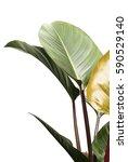 group of green leaf on white...   Shutterstock . vector #590529140