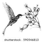 hummingbird in flight drawing | Shutterstock .eps vector #590546813