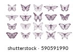 Stock vector set of butterflies ink silhouettes glowworms fireflies and butterflies icons isolated on white 590591990