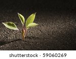 A Young Green Plant Growing Ou...