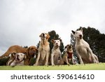 Stock photo  dogs paying attention 590614610