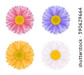 set of colorful vector flowers... | Shutterstock .eps vector #590629664