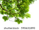 green leaves isolated on white... | Shutterstock . vector #590631890