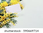 spring background   mimosa... | Shutterstock . vector #590669714