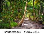 palm leaves.tropical forest on... | Shutterstock . vector #590673218