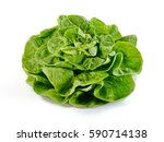 Fresh Green Salad Isolated On...