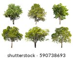 Collection Tree Isolated A White - Fine Art prints