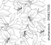 amaryllis hippeastrum lilly... | Shutterstock .eps vector #590817530