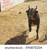 Bull Running  Traditional...