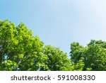 bright sunny day with clouds.... | Shutterstock . vector #591008330