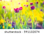 Closeup Spring Nature Landscap...