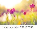 closeup spring nature landscape.... | Shutterstock . vector #591132350