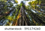 a beautiful perspective of a... | Shutterstock . vector #591174260