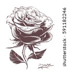 vintage hand drawn rose.... | Shutterstock .eps vector #591182246