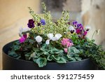 Flowers In Large Planter In...