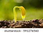 agriculture and new life... | Shutterstock . vector #591276560