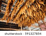 Small photo of Tobacco leaves: Classical way of drying tobacco in Cuba (Pinar del Río)