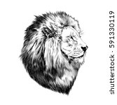 Stock vector lion proud face in profile looking into the distance sketch vector black and white drawing 591330119