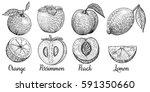 set isolated fruit  lemon ... | Shutterstock .eps vector #591350660