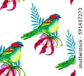 summer tropical background of... | Shutterstock . vector #591437273
