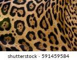 Jaguar  Panthera Onca  Fur ...