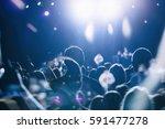 moscow 19 november 2016 concert ... | Shutterstock . vector #591477278