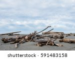 Driftwood On The Beach In...