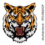 angry tiger face | Shutterstock .eps vector #591486029