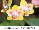 orchidea | Shutterstock . vector #591502274