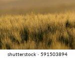 spring in moravia | Shutterstock . vector #591503894