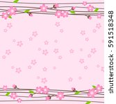 pink background cherry blossoms.... | Shutterstock .eps vector #591518348