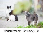two cats siting on the street . grey cat . black and white cat