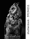 vertical black and white photo... | Shutterstock . vector #59154211