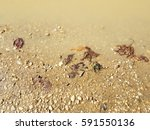 Mud Puddle With Small Stones