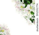 spring floral border. white... | Shutterstock . vector #591551774