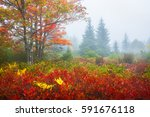 autumn forest  dolly sods  west ... | Shutterstock . vector #591676118