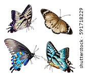 illustration of butterfly  on... | Shutterstock . vector #591718229
