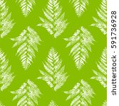 seamless pattern with fern... | Shutterstock .eps vector #591736928